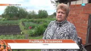 Красноуфимск Собаки пугают садоводов 03 06 16