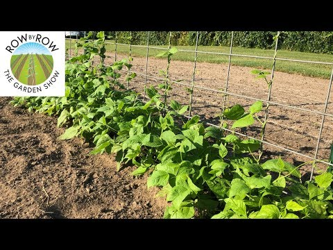 Top 4 Reasons You Should Grow Your Own Food