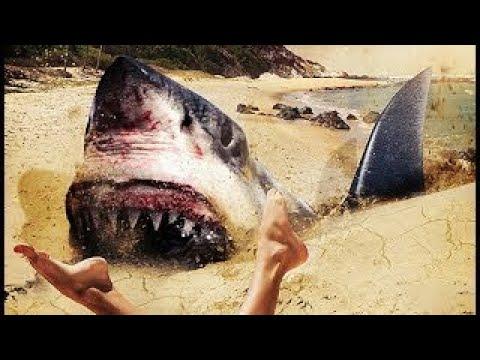 subtitrare sand sharks 2011