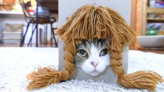 色々な髪形とねこ2。-Various hairstyles and Maru 2.- thumbnail
