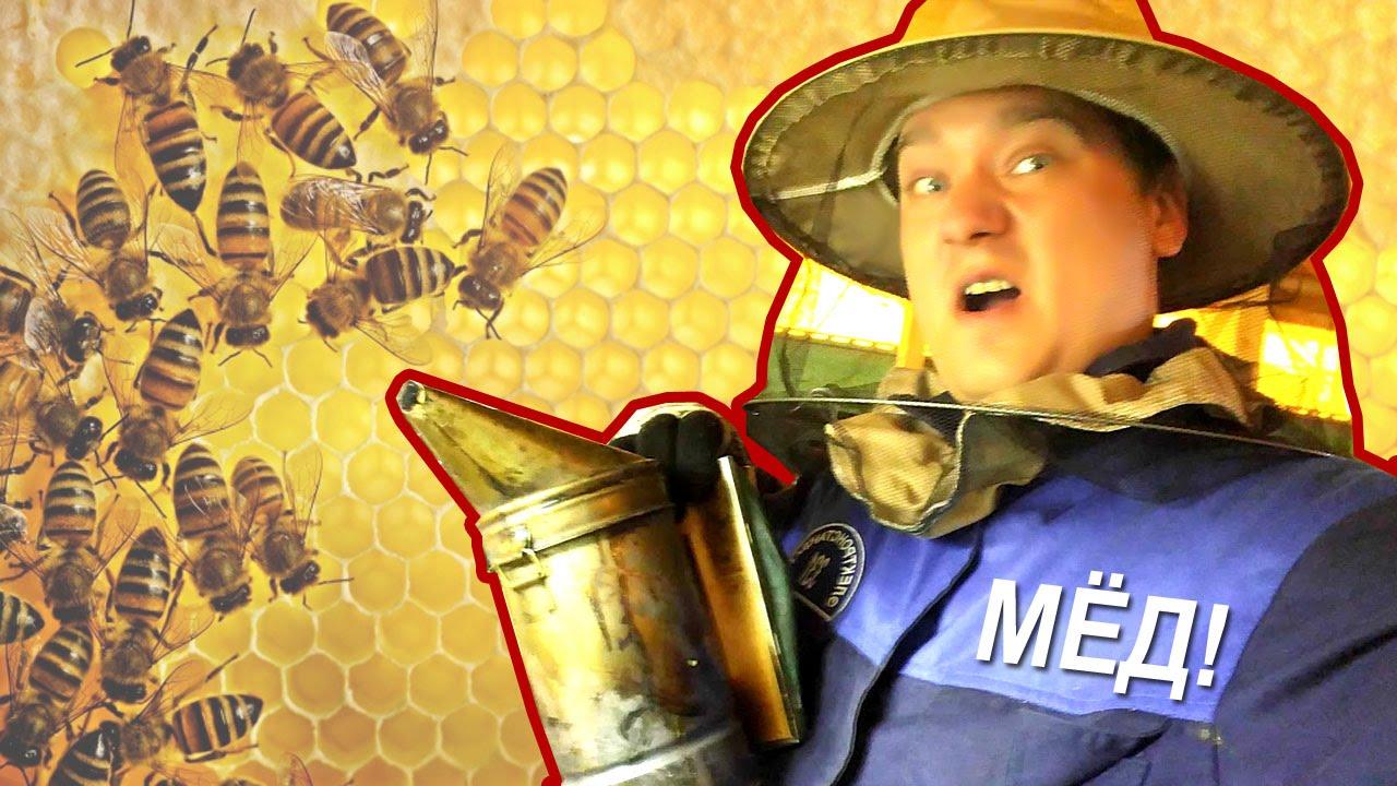 Прикольные картинки к песне пчеловод