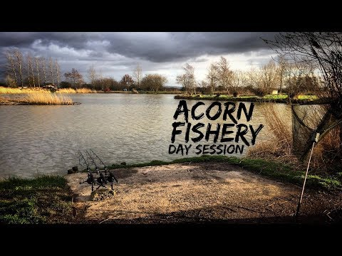 Acorn Fishery, Peg 15 || Day Ticket Carp Fishing || Martyns Angling Adventures