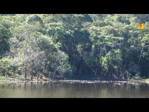 Como Avaliar e Monitorar a Restauração Florestal - Curso a Distância Restauração Florestal CPT