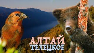 Алтай заповедный: озеро Телецкое | Film Studio Aves