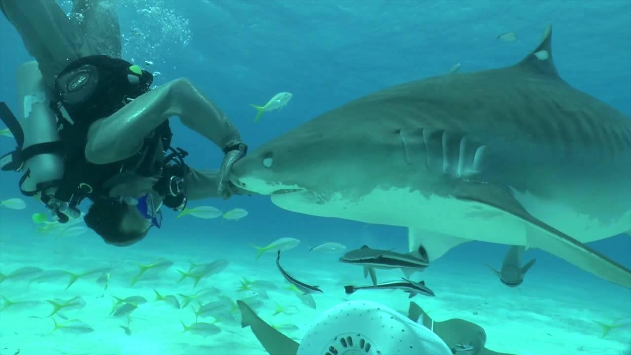 Grand Bahama Island Diving