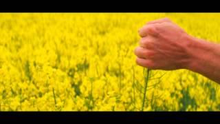 Видео: WELOVEYOUWINONA - Anyway (2013)