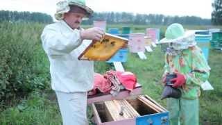Пчеловодство. Сергей Толстов советы для начинающих пчеловодов. Меченая плодная матка 2013