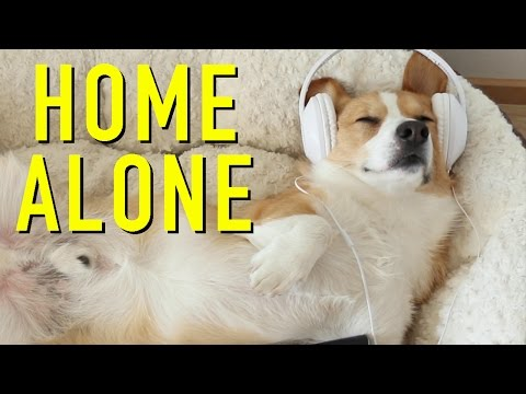 WHEN DOGS ARE HOME ALONE - Topi the Corgi