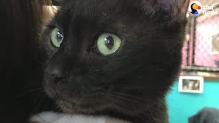 Shelter Cat Chooses His Parents | The Dodo