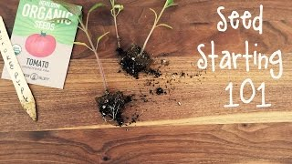 Seed Starting 101| IN BETH'S GARDEN