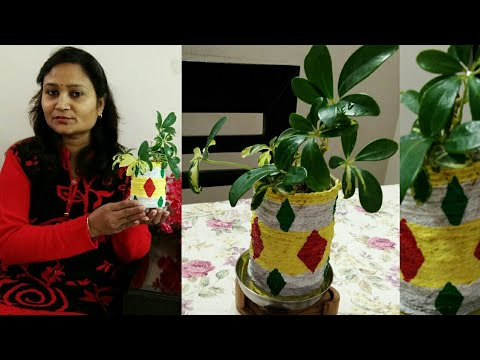 diy-ideas,do-it-yourself,planter-from-waste-plastic-bottle,anvesha,s-creativity