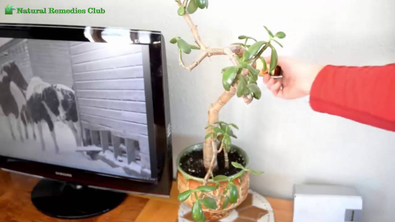How To Stop Cats From Digging In Your House Plants Natural Remedies Club