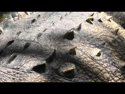 Wild nature Mexico: Discover La Tovara, Nayarit.