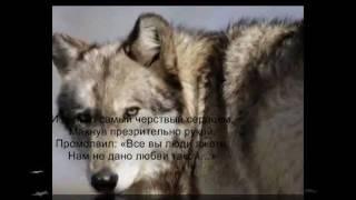 Легенда о верности и жестокости    Посвящается моей собаке Джейкобу,погибшему от людской жестокостиmuvee 001