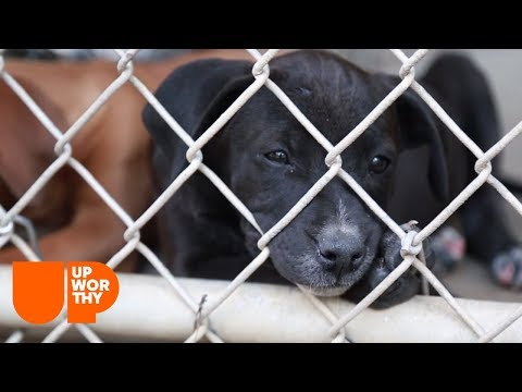 See how a dog rescue group chooses the dogs it saves.   A Rescue Dog's Journey Part 2