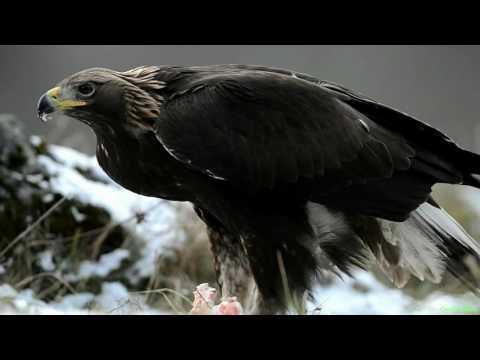 Живая природа (птицы, животные, природа) под музыку - Видео онлайн