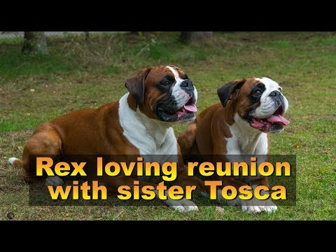 Rex Loving Reunion  With Sister Tosca 😍