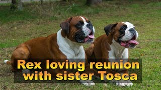 Rex Loving Reunion  With Sister Tosca
