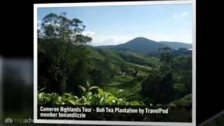 Boh Tea Plantation - Cameron Highlands, Pahang, Malaysia