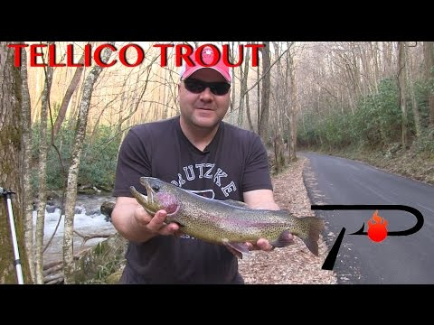 Tellico River Trout Fishing