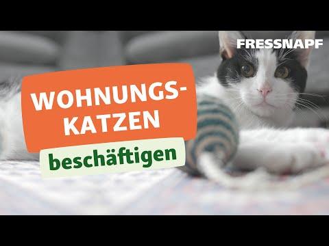 Eine Katze In Der Wohnung Halten Infos Bei Fressnapf Fressnapf