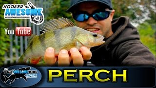 PERCH FISHING with soft plastic lures - TAFishing Show