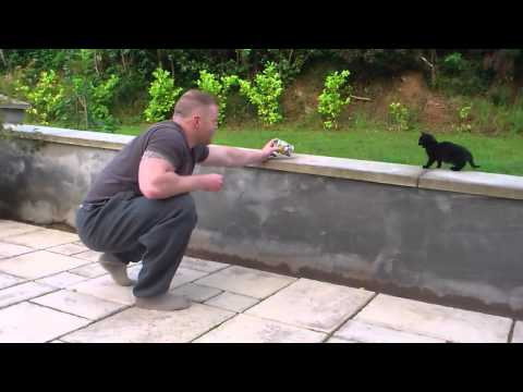 Taming a feral cat