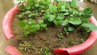 টবে বেগুন চাষ পদ্ধতি    বেগুন গাছের যত্ন ও পরিচর্যা / বেগুন গাছ বপনের সময়/ Tech Bangla Bd