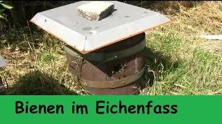Bienen im Weinfass Eichenfass eingesiedelt