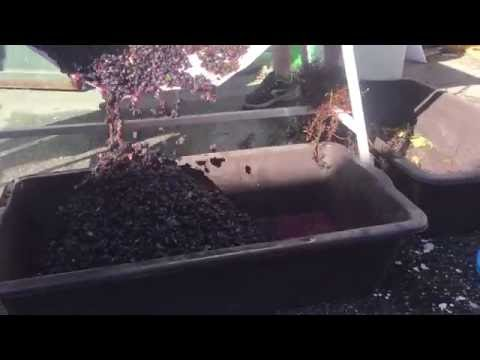 How to Make Organic Red Wine at Home