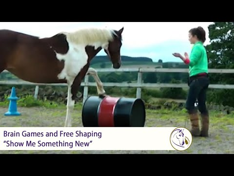 Brain Games And Free Shaping To Enhance Your Horse's Creativity: