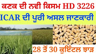 Hd 3226 wheat new variety full information