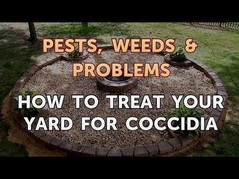 get rid of giardia in yard