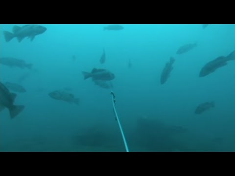 Deep Sea Fishing Action 3 - Filmed Underwater With GoPro Camera