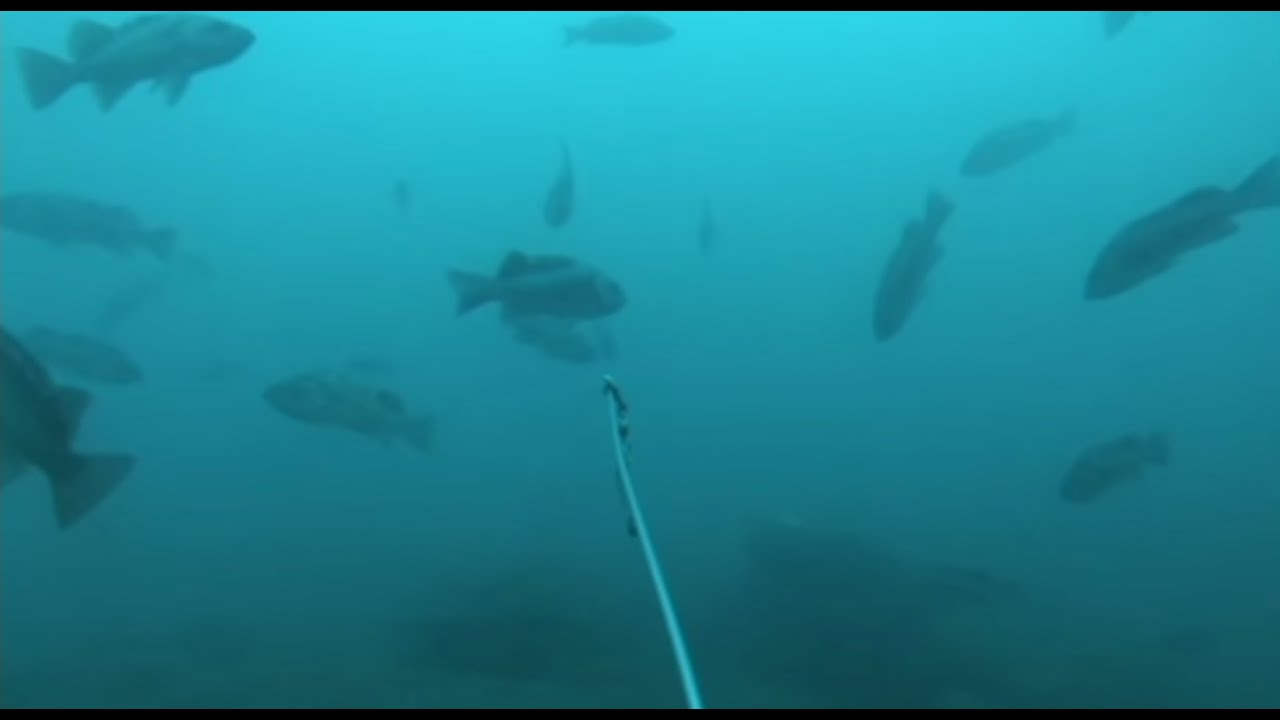 deep sea fishing action 3 - filmed underwater with gopro camera, Reel Combo