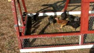 Diy How To Build A Cheap Chicken Tractor