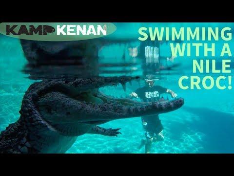 Swimming with a Nile Crocodile!