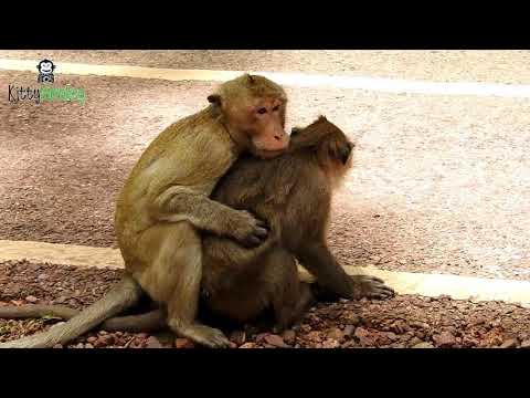 why male monkey keep holding female monkey