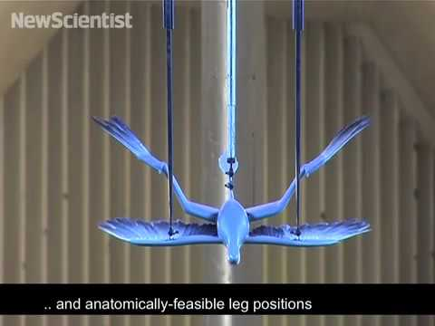 Microraptor in wind tunnel reveals flight secrets