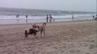 Sex on the Beach in Goa (2)