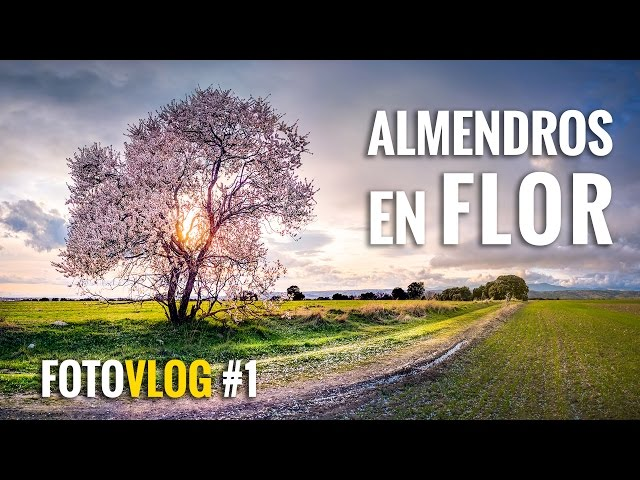 ALMENDROS en FLOR | FotoVlog #1