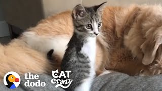 This Tiny Kitten Grows Up Racing Around Her House Like A TRex | The Dodo Cat Crazy