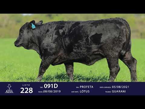 LOTE 228 - TAT 091D