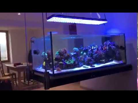 Amazing Aquarium from France with Orphek Atlantik Reef Aquarium LED Lighting