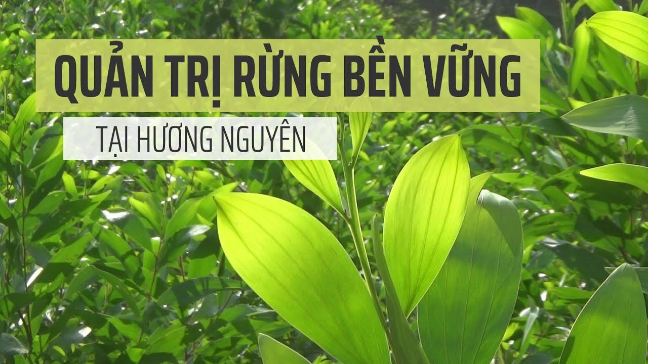 Quản trị bền vững rừng Hương Nguyên