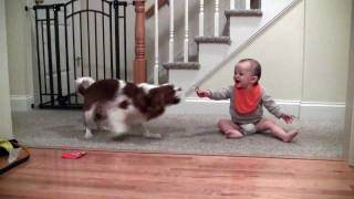 Adorable laughing baby and Cavalier King Charles playing game