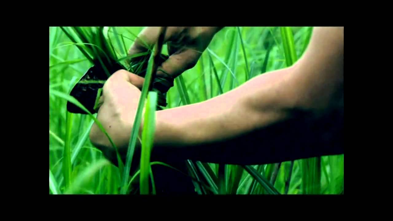 【靈魂的旅程】電影主題曲《我遺忘已久的泰雅》不浪‧尤幹感動遺作 - YouTube