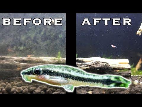 Best Nano Tank Algae Eaters