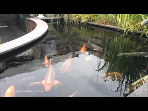 5600 Gallon ( 21000 Liter ) Customer Koi Pond With Window And Plant Filter July 2016