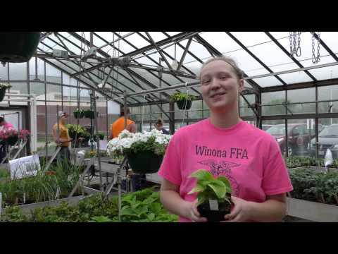 2015 WAPS Employee Video